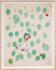 Paule Marrot Cherries 03