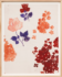 Paule Marrot Fleurs Roses Red 12
