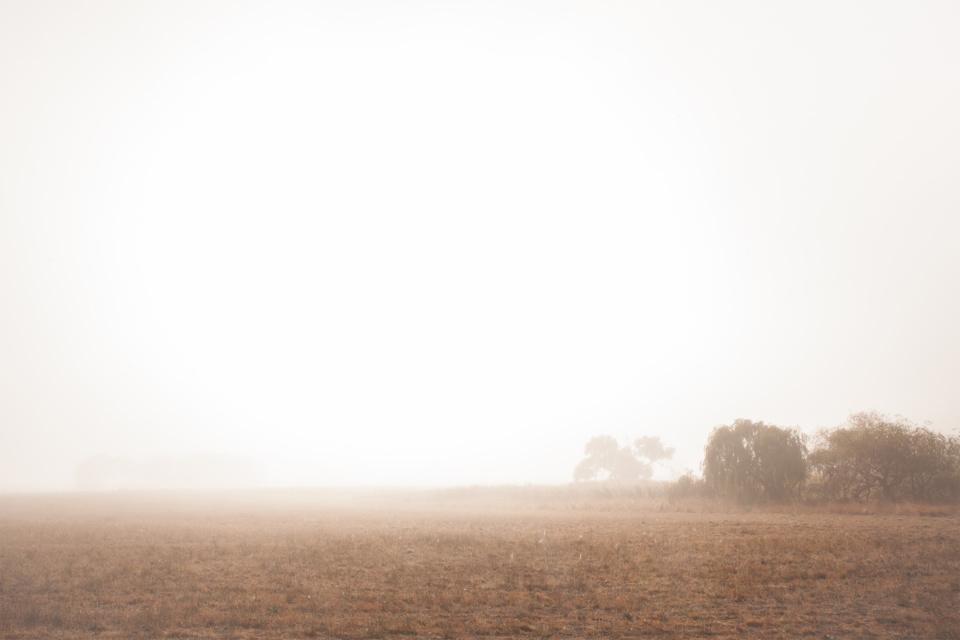 Michelle Schofield foggy autumn mornings