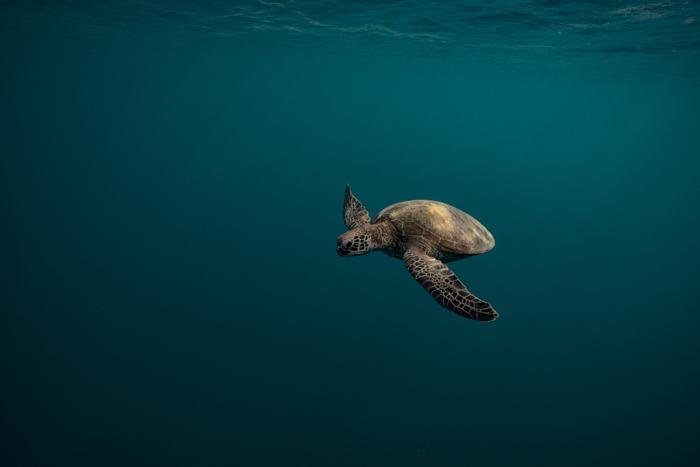 Liam Lynch Gliding Turtle