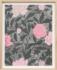 Paule Marrot Jardin Rose 16