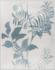 Paule Marrot Les Perroquets Grey 20