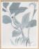 Paule Marrot Les Perroquets Gris 1 21
