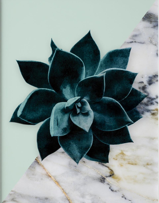 Arti Shah Palm Beach Succulentv2