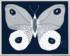 Paule Marrot Papillion Navy 2 Large High Res