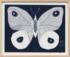 Paule Marrot Papillion Navy 2 31