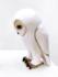 Jenny Rowe White Owl 02 adjust