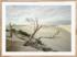 Craig Holloway Yanerbie Sand Dunes Framed Raw