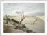 Craig Holloway Yanerbie Sand Dunes Framed White
